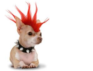 dog-fashion