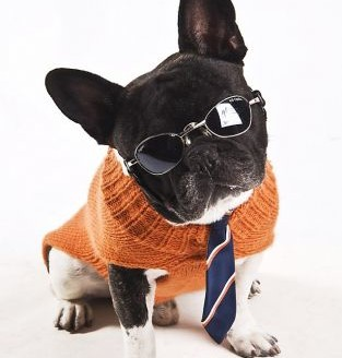dog-fashion-disco