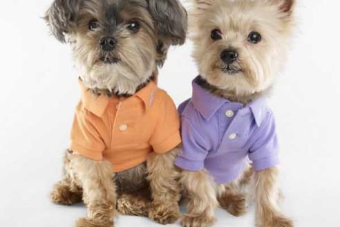 dog-fashion-disco-tour