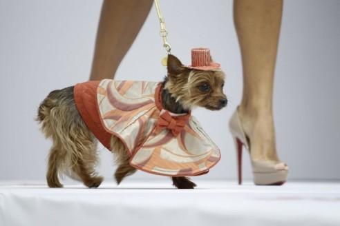 dog-fashion-show