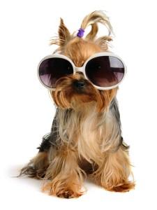 fashion-dog-carrier