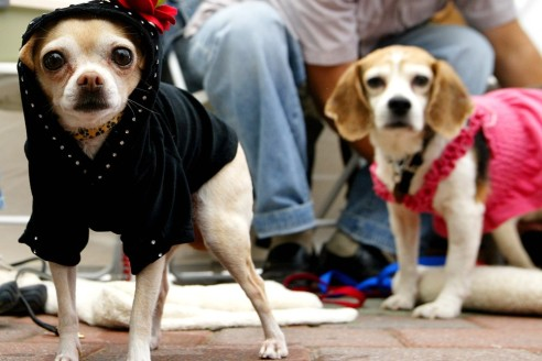 fashion-dog-clothes