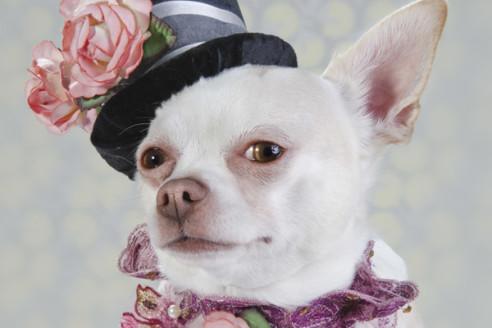 fashion-dog-collars