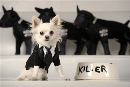 fashion-dog-harness